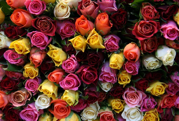 Are Flowers Still The Right Gift
