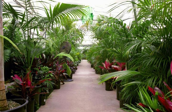 The Ultimate Palm Trees For Your Tropical Garden