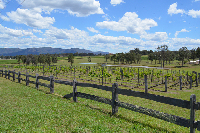 A Trip Through The Wine Country
