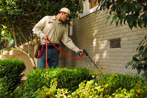 What Are The Different Options For Pest Control?