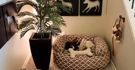 Making Your Home A Pet Haven