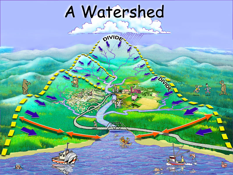 What Is Watershed Conservation?