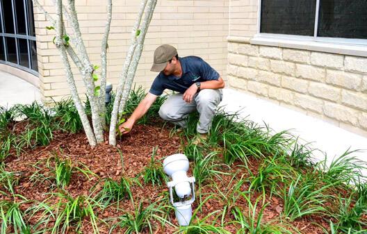 Landscape Maintenance By Professionals