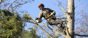 tree surgeonArborists Of England: The Perfect Tree Rescuerss Southend