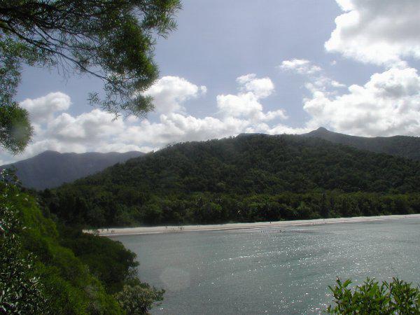 Daintree Rainforest's Lush Greenery