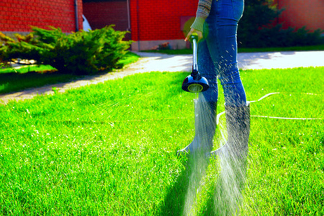 Few Things To Remember While Lawn Seeding