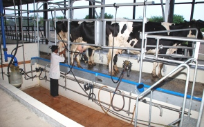 Technological Advancement Of Dairy Farming In India