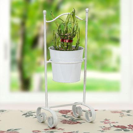 lucky-bamboo-planter_1