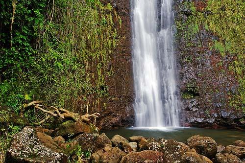 Manoa Falls Honolulu