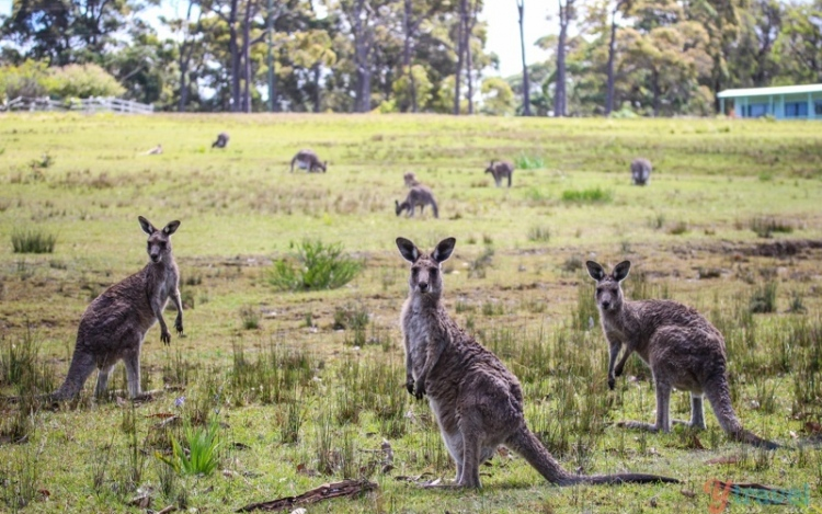 3 Places For Finding Wildlife In and Around Sydney