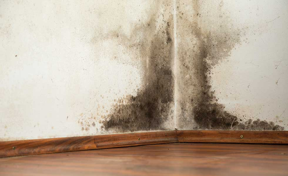How Can Rising Damp Be Spotted And Stopped?