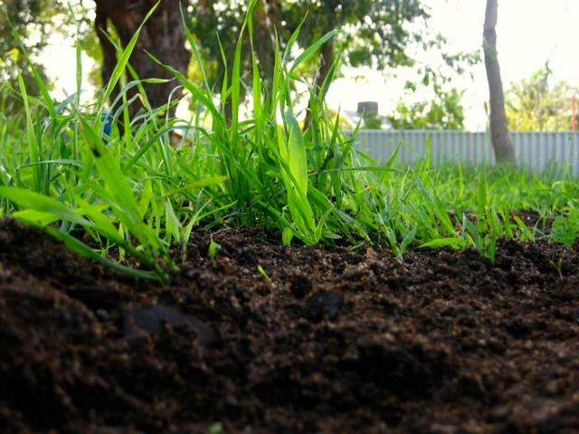 The Benefits Of Compost Used In The Garden