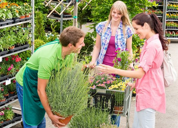Tips For Buying Plants from A Wholesale Nursery