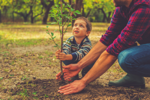 How to Grow a Tree When You Start With a Seed