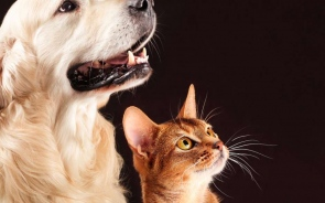 4 Unique and Interesting Ideas For Your Pet Memorial