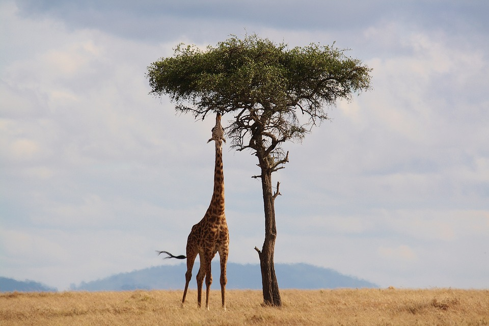 Important Travel Tips When You Visit Kenya