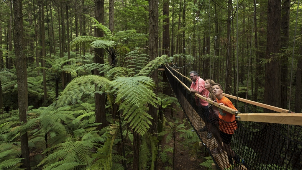 Amazements About Studying Abroad in New Zealand
