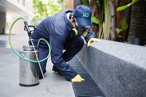 Choosing The Best Pest Control Services