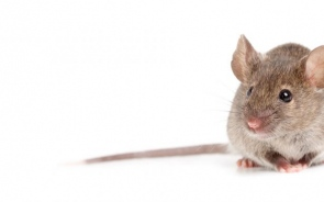 5 Benefits of Mice Control and Why You Shouldn't Neglect It at Home