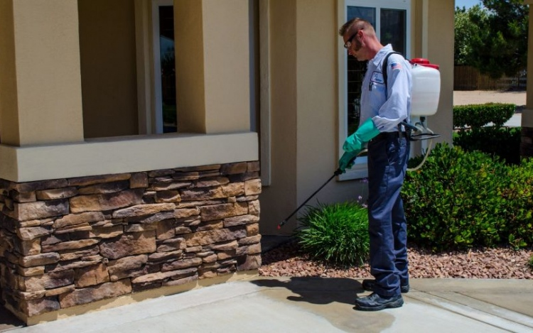 A Guide To Hiring The Best Pest Control Services