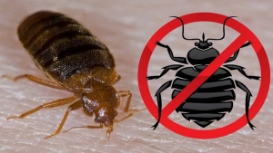 How To Get Rid Of Bed Bugs Inside Of Your Home