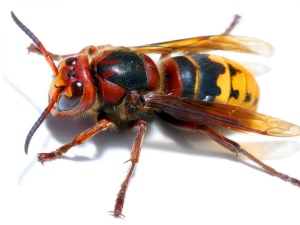 Keeping Wasps Away From Summertime Fun