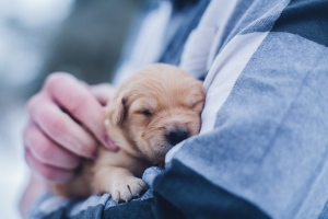 How To Choose The Best Veterinarian For Your Pet