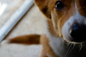 Going Organic: 4 Benefits to Your Pet's Health